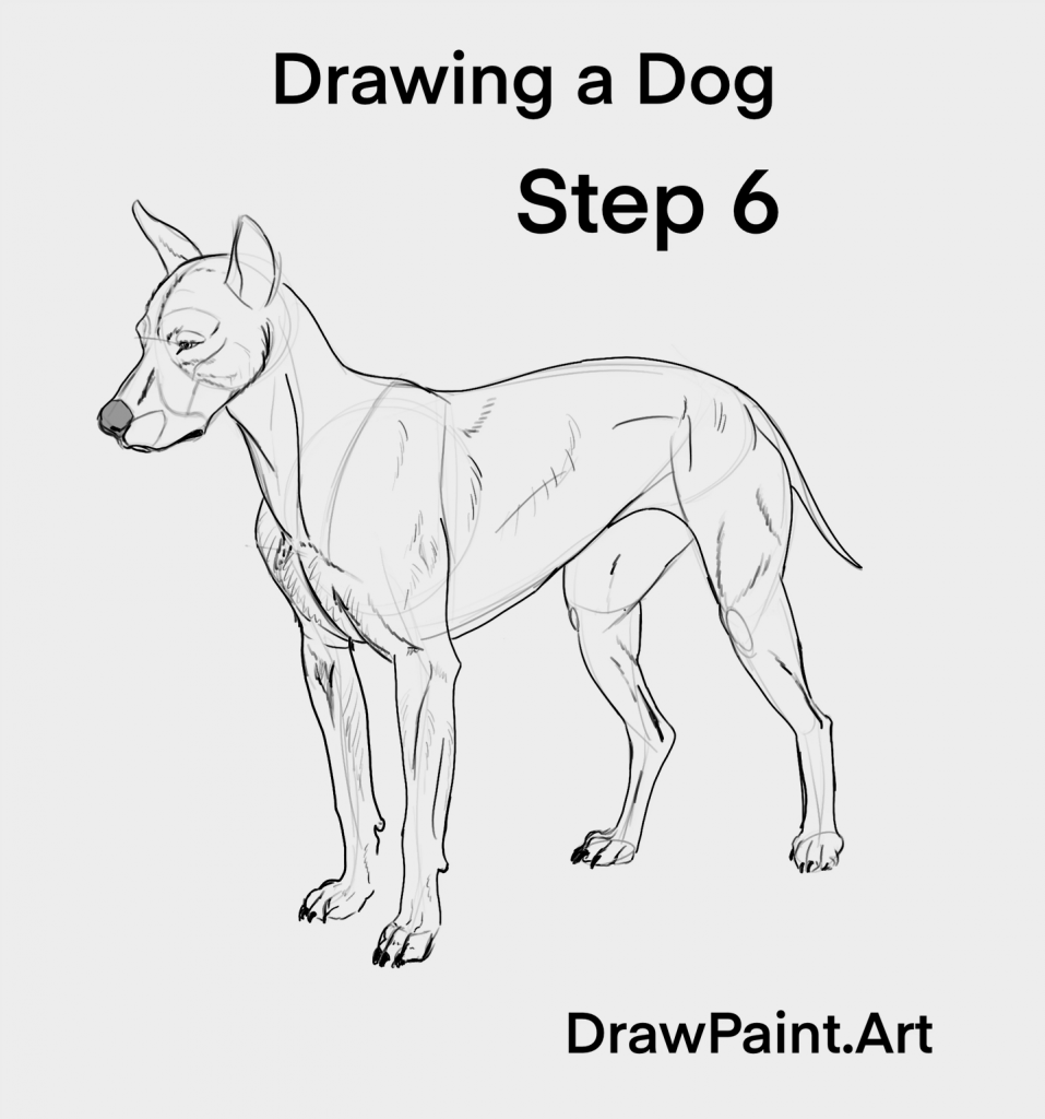 How To Draw Animals Any Dog In 7 Steps Drawpaint Art